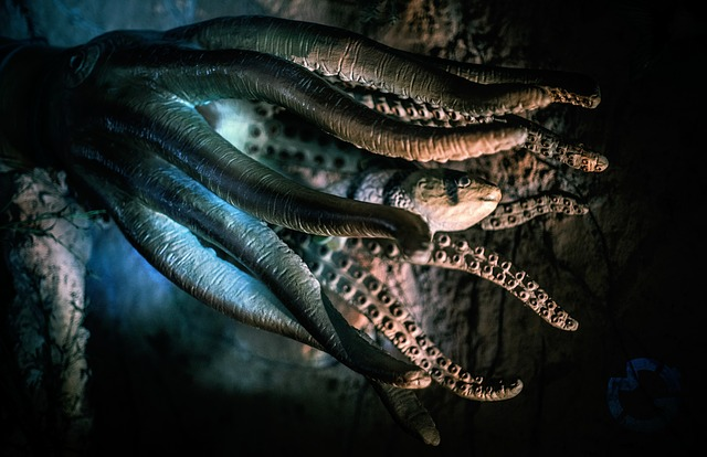 chapadla chobotnice